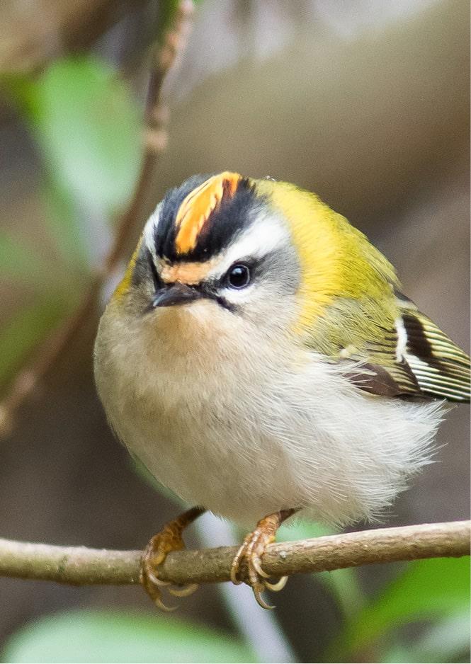 Oiseau dans la nature dans le clôt de la marque S BORDEAUX